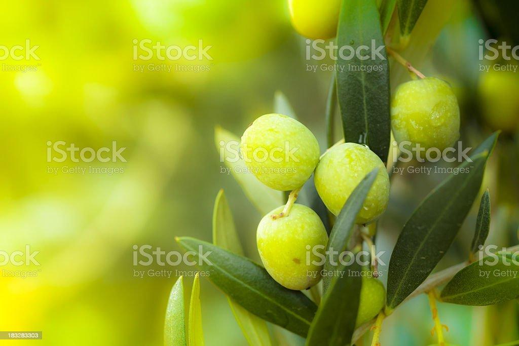 Fresh olives royalty-free stock photo