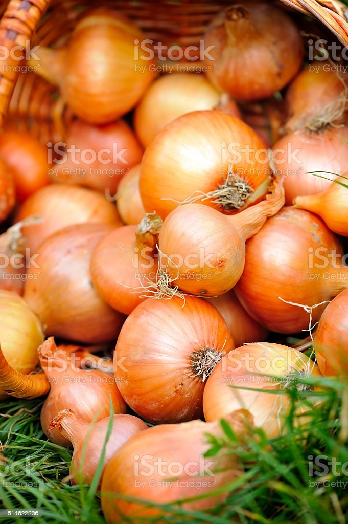 Fresh onions in basket on grass stock photo