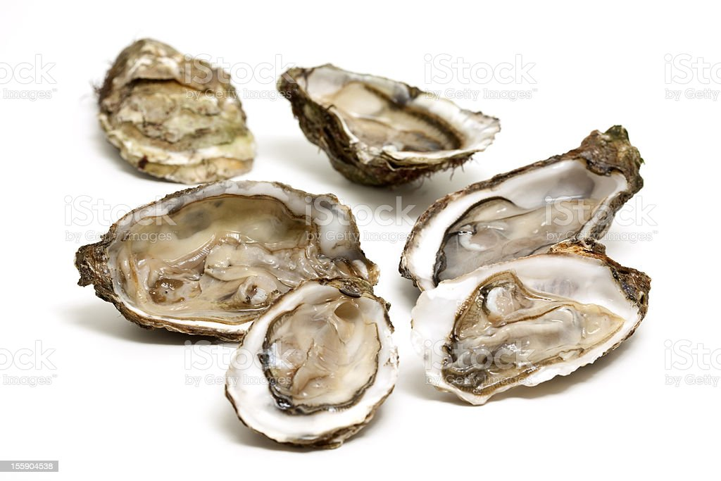 Fresh open oysters isolated on white  royalty-free stock photo