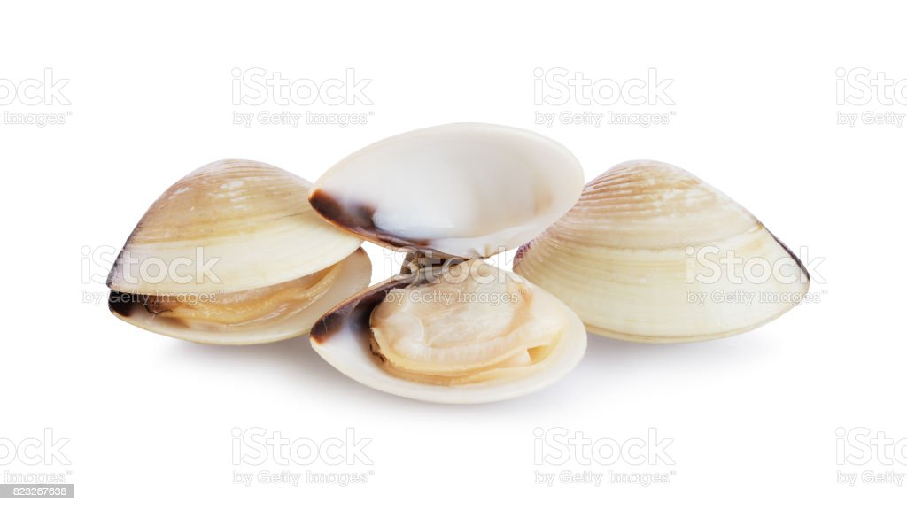 Fresh opened and closed clams stock photo