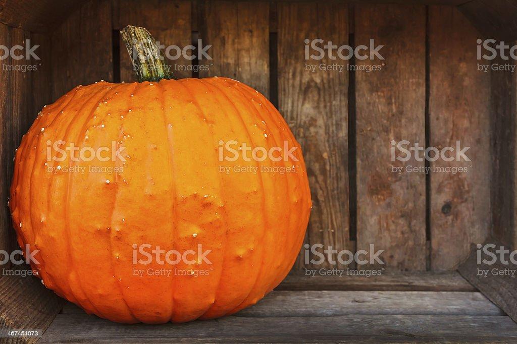 Fresh orange pumpkin inside an old wooden crate stock photo