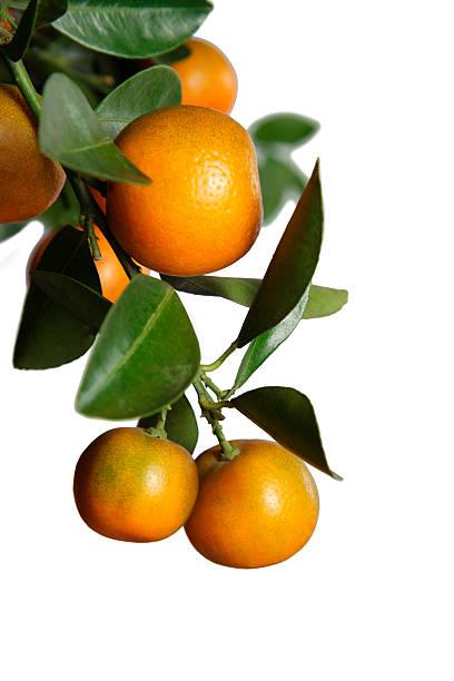 fresh oranges isolated on white background - orange fruit stock photos and pictures