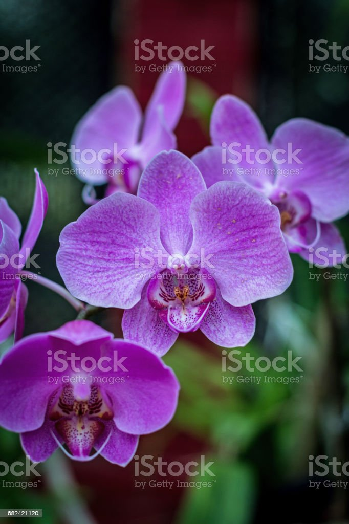 Fraîche fleur d'orchidée en fond de jardin photo libre de droits