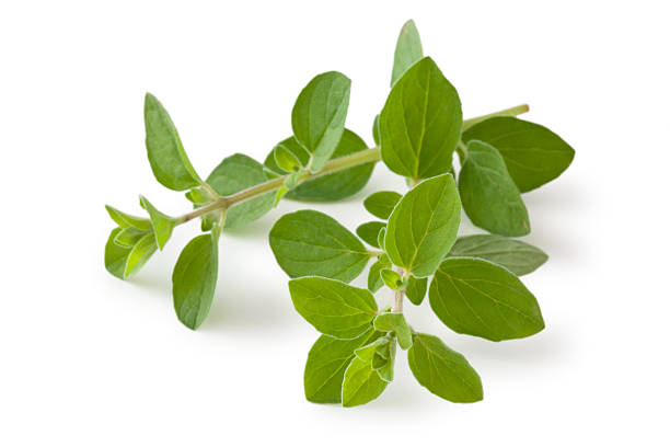 Fresh Oregano. Isolated on white. oregano stock pictures, royalty-free photos & images