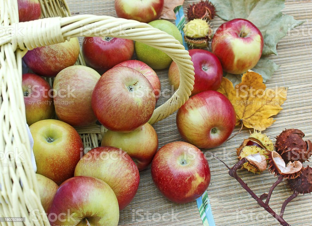 Fresh organic apples in a wicker basket royalty-free stock photo