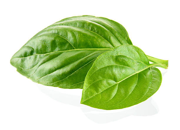 fresh organic basil leaves isolated on white background - basil stock photos and pictures
