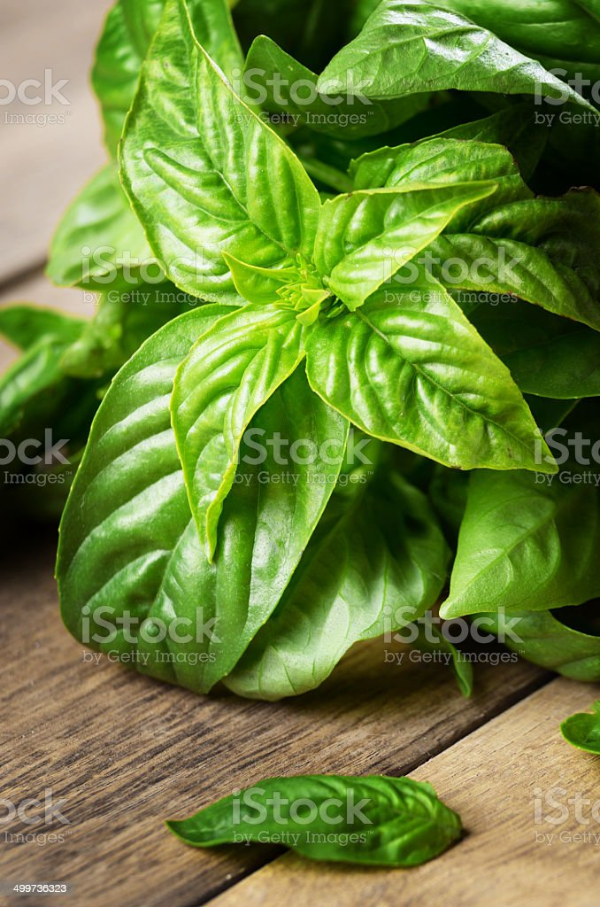 Fresh organic basil stock photo
