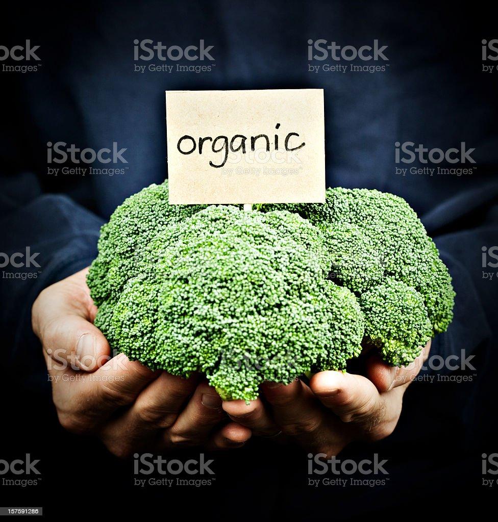 Fresh Organic Broccoli royalty-free stock photo
