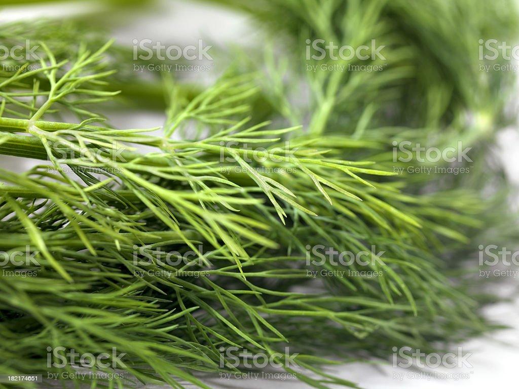 Fresh Organic Dill stock photo