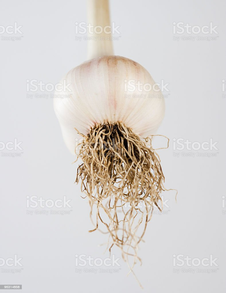 Fresh organic garlic with roots against white background, copy space royalty-free stock photo