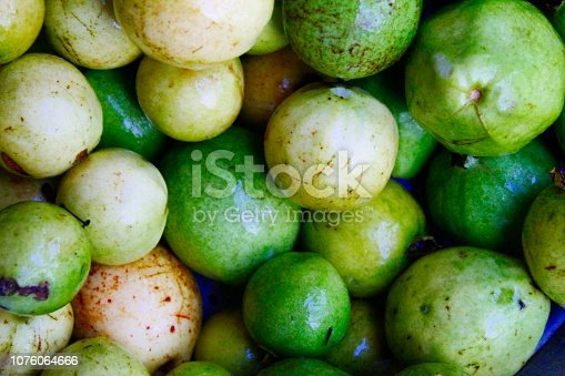 Fresh Organic green and ripe guava (Psidium guajava) fruit India,Odisha.Other names apple/common guava, goyavier, guabang, Guajava, kautonga, kuahpa, Tropical Guava, yellow guava, French ; goyave.