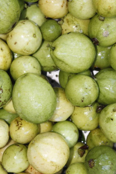 Fresh Organic Green And Ripe Guava Fruit Indiaodishaother