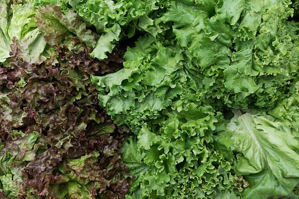 Vert bio de prime fraîcheur à la vente au marché farmers market - Photo