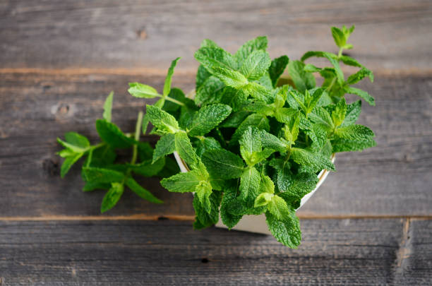 Fresh organic mint bunch on the old rustic wooden table. stock photo