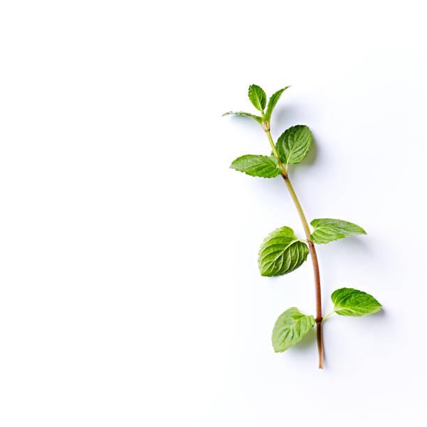 fresh organic mint leaves on white background - liść mięty przyprawa zdjęcia i obrazy z banku zdjęć