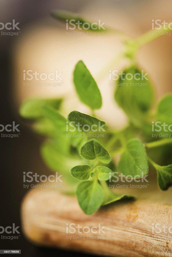 Fresh Organic Oregano in Natural Light royalty-free stock photo
