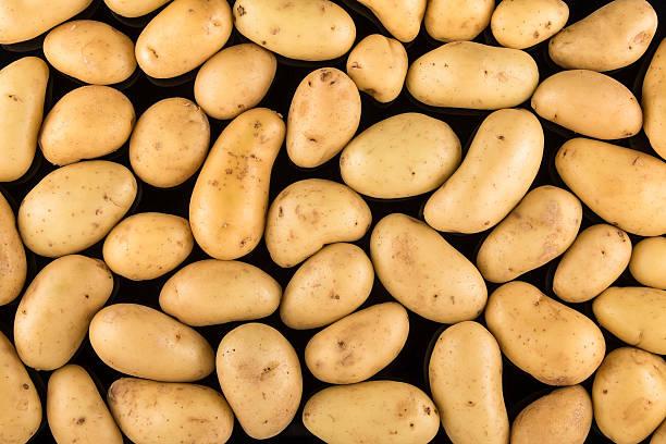 Fresh organic potatoes on a black background stock photo