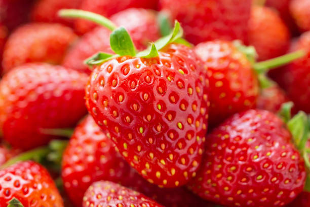 fresh organic red ripe strawberry fruit background closeup - fragole foto e immagini stock