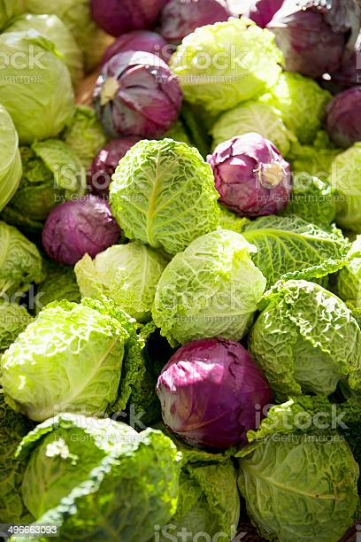 Fresh Organic Savoy Cabbage And Purple Cabbage Stock Photo Download Image Now Istock
