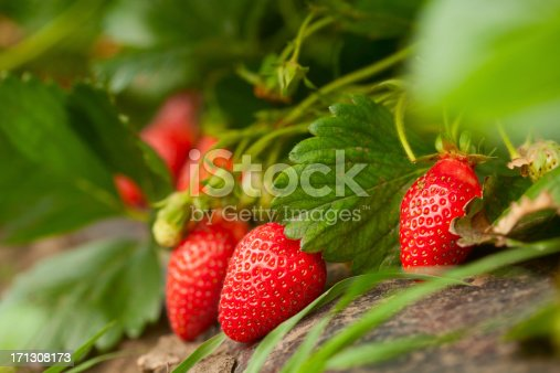 Fresh organic strawberry