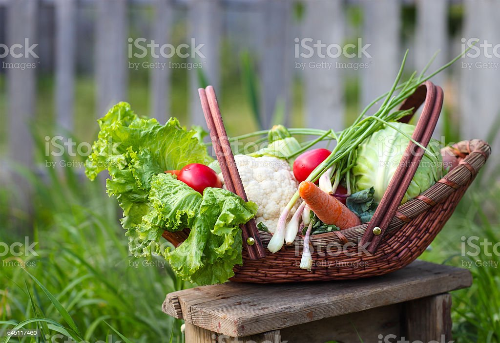 Fresh organic vegetables in the basket stock photo