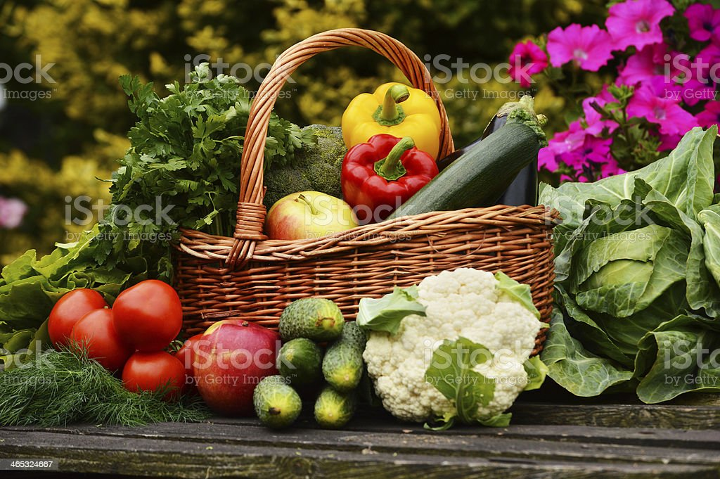 Fresh organic vegetables in the garden stock photo