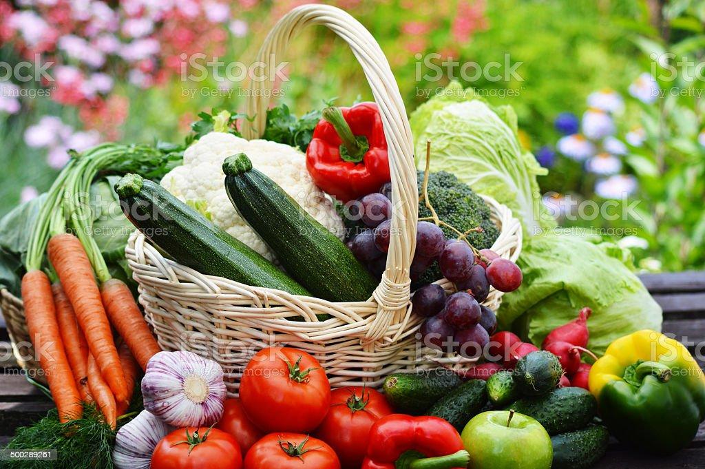 Fresh organic vegetables in wicker basket in the garden stock photo