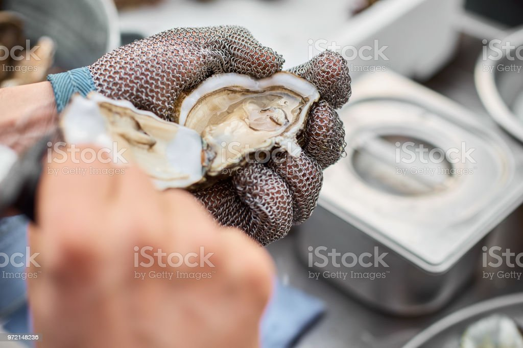 Fresh oyster held open with a oyster knife in a hand with an oyster glove, close-up stock photo