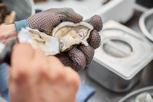 Fresh oyster held open with a oyster knife in a hand with an oyster glove, close-up Fresh oyster held open with a oyster knife in a hand with an oyster glove The oyster opening background with bokeh mollusk stock pictures, royalty-free photos & images