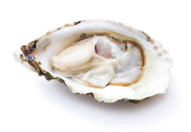 fresh oyster isolated - oyster stock pictures, royalty-free photos & images