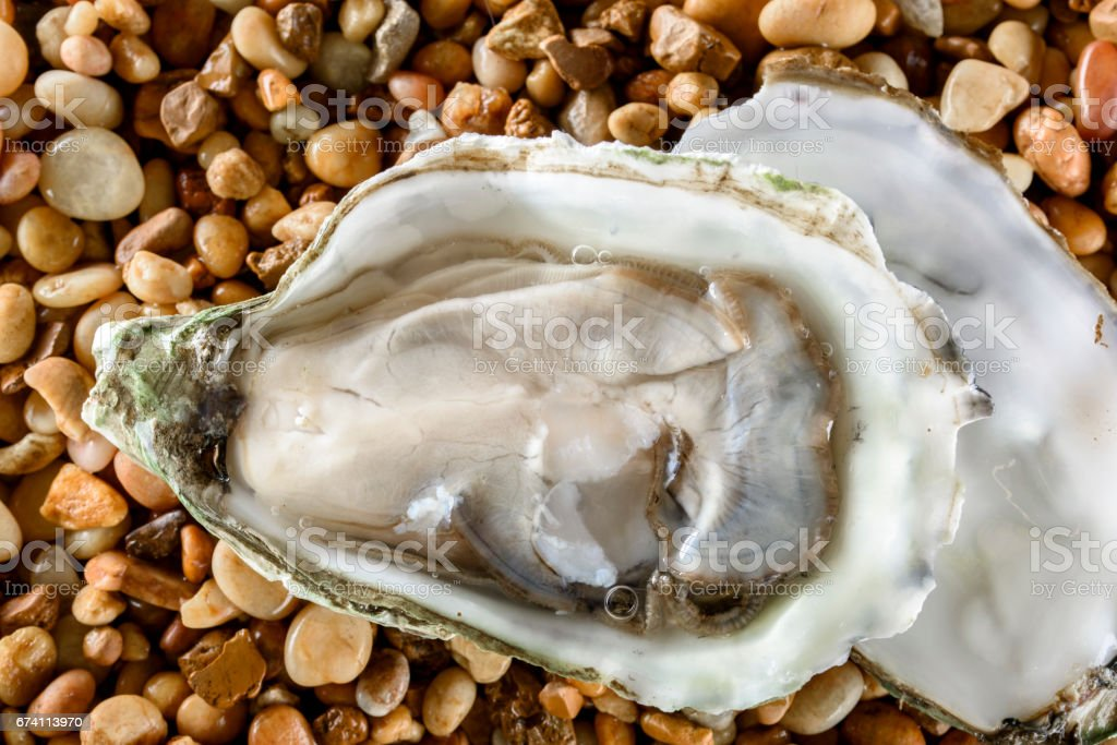 新鮮的牡蠣 免版稅 stock photo