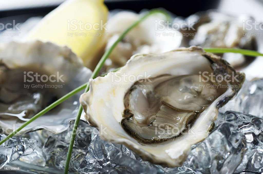 Fresh Oyster Platter stock photo