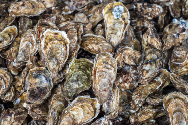 fresh oysters at the fish market - oyster stock pictures, royalty-free photos & images
