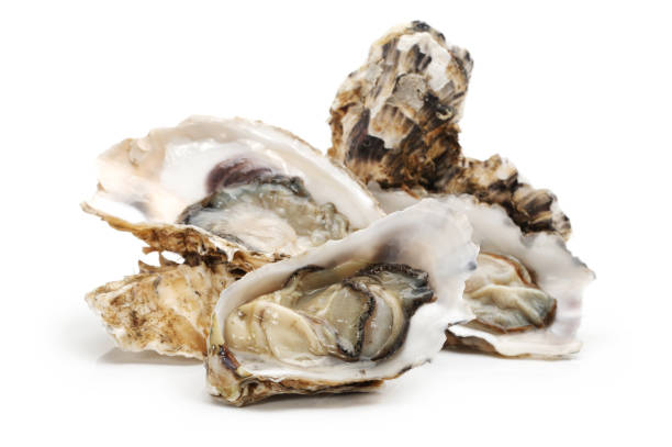 fresh oysters on white background - oyster stock pictures, royalty-free photos & images