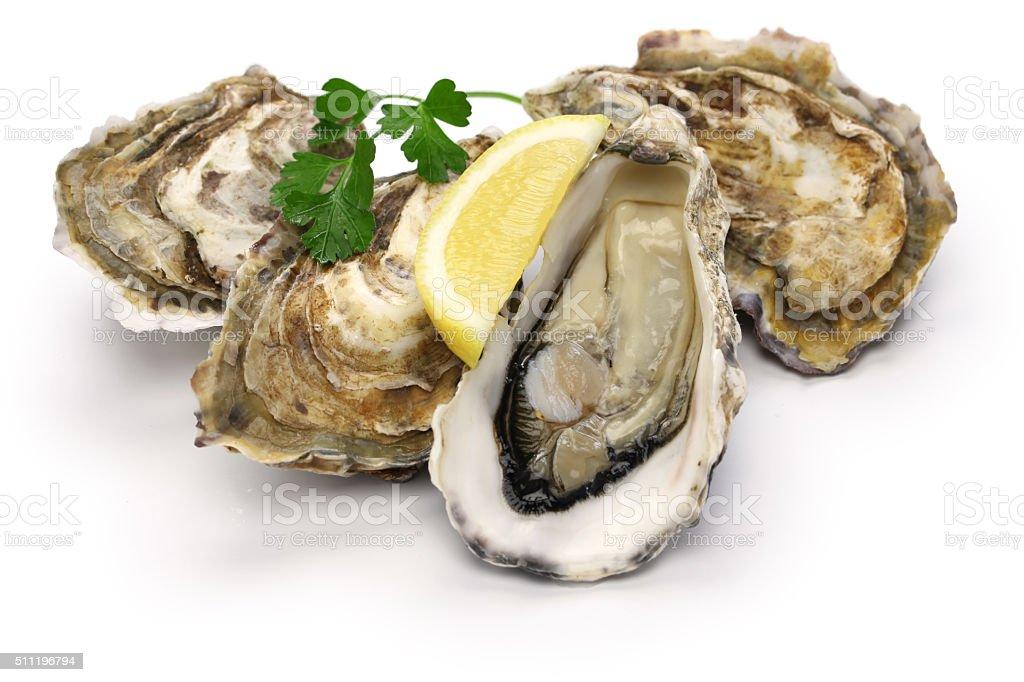 Frische Austern – Foto