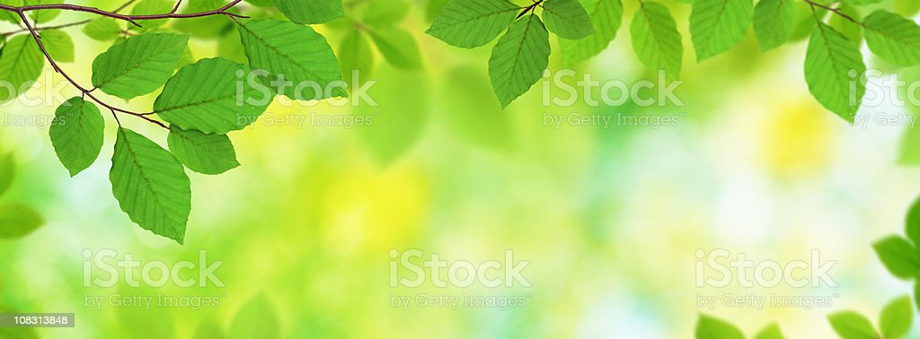 Fresh Panoramic Leaves royalty-free stock photo