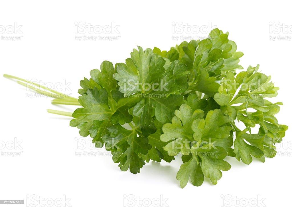Frische Petersilie Kräuter Blätter, isoliert auf weißem Hintergrund mit Rückenausschnitt Lizenzfreies stock-foto