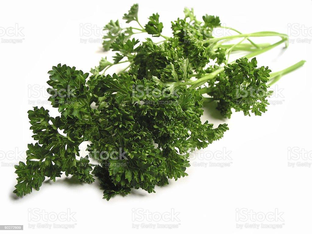 Fresh parsley on white background royalty-free stock photo