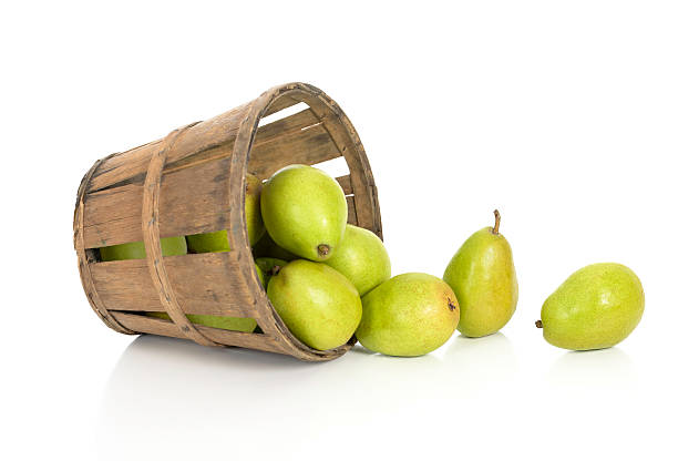 Fresh Pears Spill from a Rustic Basket stock photo