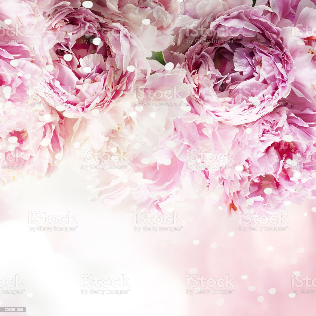 Fresh peony, greeting card for mothers day, 8 March, Valentintin stock photo