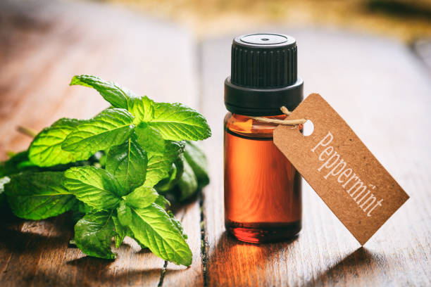 Fresh peppermint and oil on wooden background stock photo