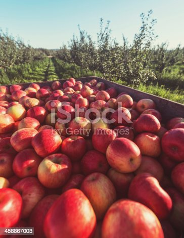 istock Fresh Picked Apples 486667003