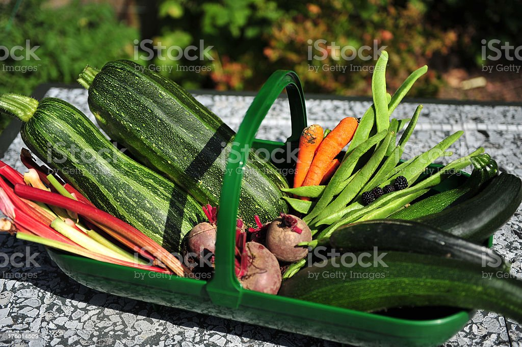Fresh picked basket of vegetables from the garden royalty-free stock photo