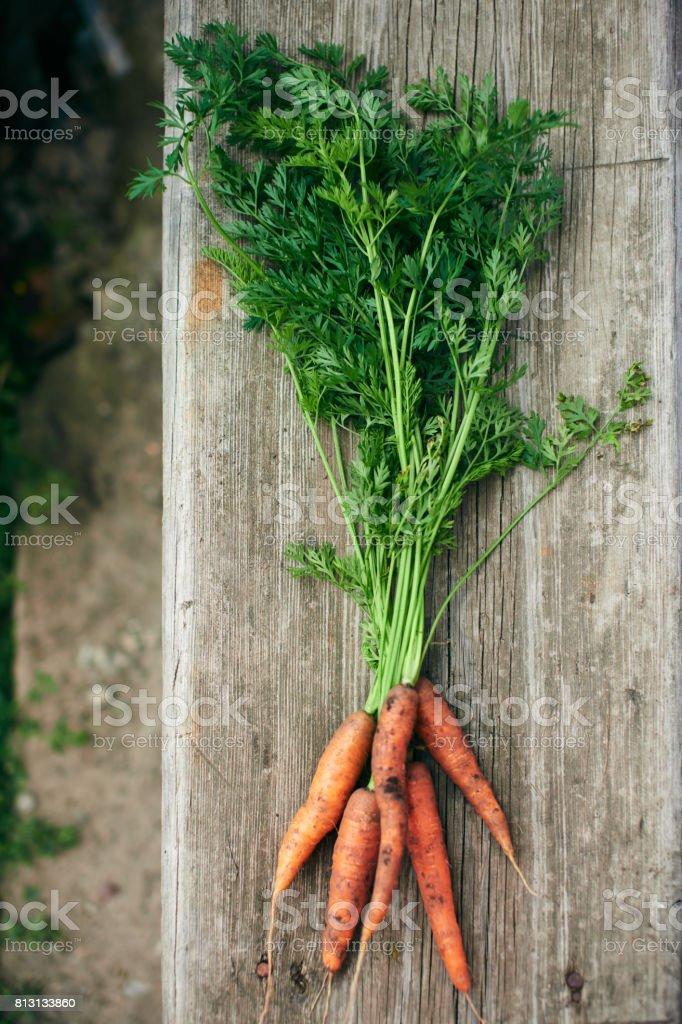 Raw farm grown produce of carrots