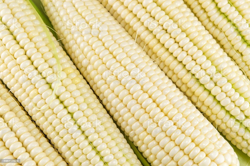 Fresh picked corn cobs in a row stock photo