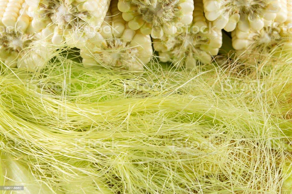 Fresh picked corn cobs on straw stock photo