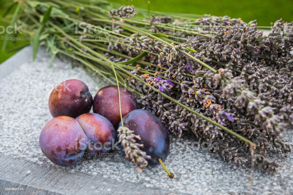 Fresh picked plums with lavender flowers stock photo