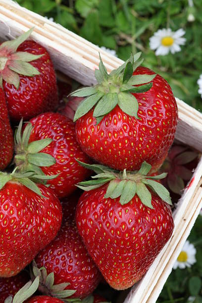 strawberrys in einem Korb – Foto
