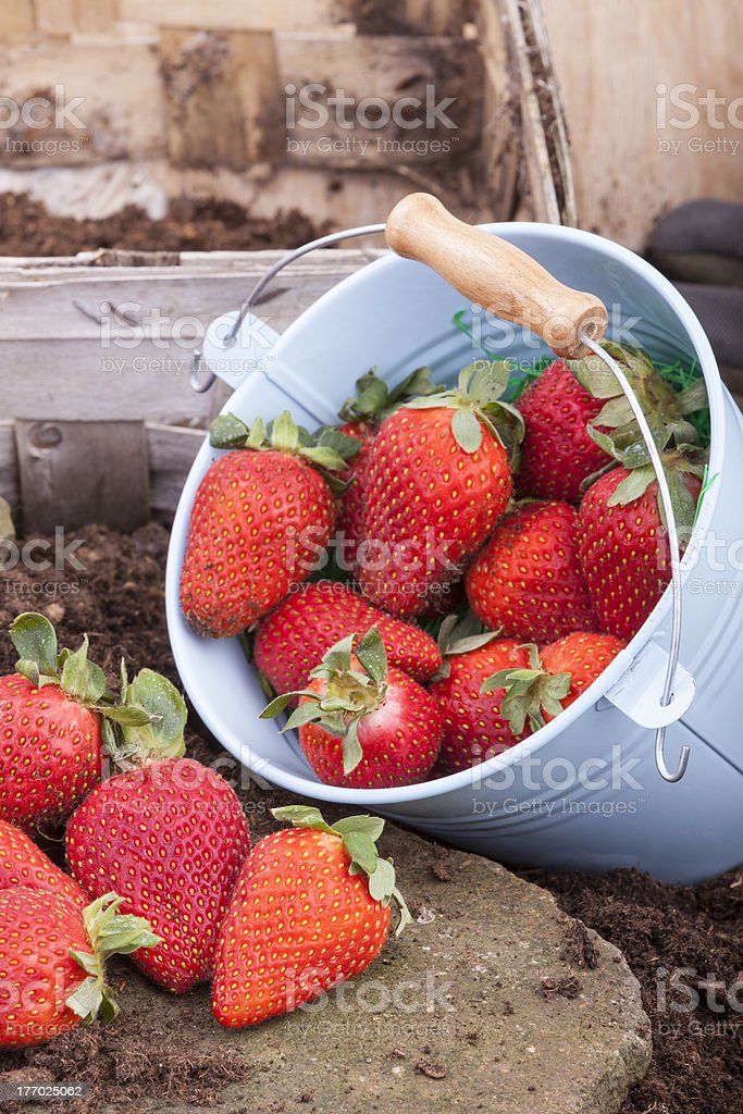 fresh picked strawberries royalty-free stock photo
