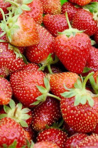 Fresh Picked Strawberries stock photo
